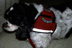 My Service Dog, Friday