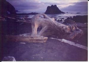 Driftwood at twilight