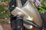 Butterfly on Epona