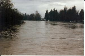 Flooding on the Nooksack River, 1989