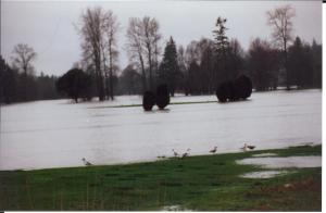 Flooded golf course, 1989