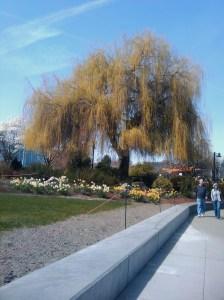 Budding tree